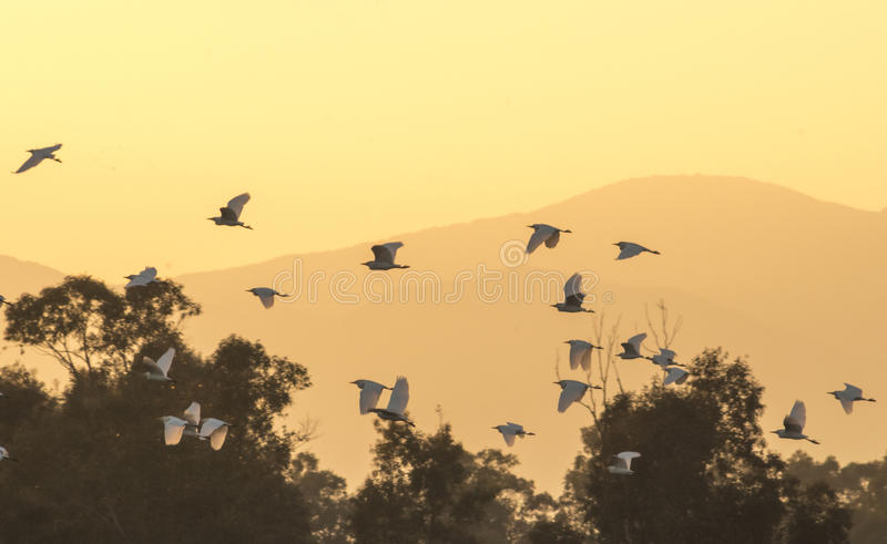 Download Birds at sunset stock image. Image of peace, birds, sunset - 39502843