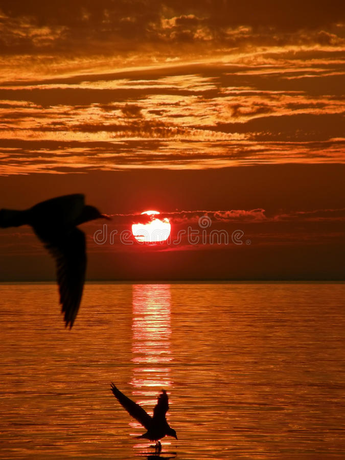 Birds, sunset, sea stock photos