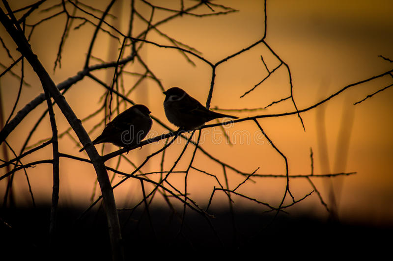 Birds at sunset. Birds sitting on a tree branch at sunset as silhouettes, look very picturesque. Autumn wild bird almost deprived of sustenance, and therefore royalty free stock photos