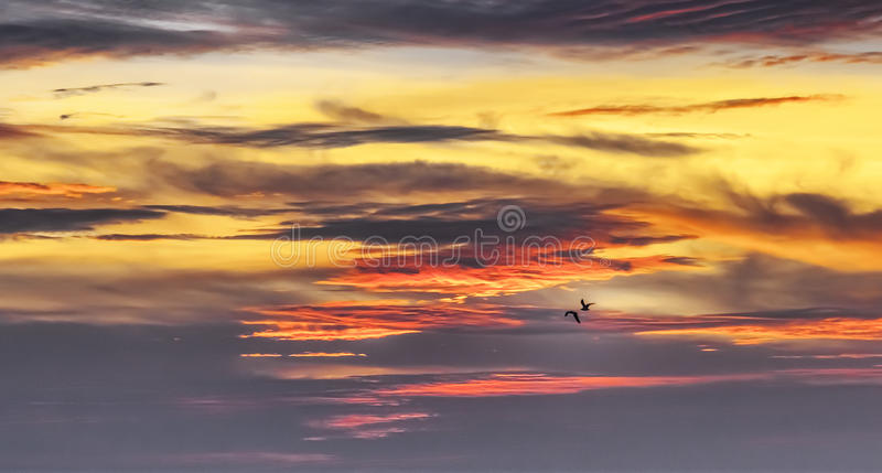 Birds in the sunset sky. An image of two birds in the sunset sky royalty free stock photos