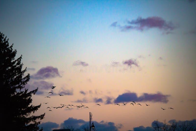 Birds on sunset sky royalty free stock photography