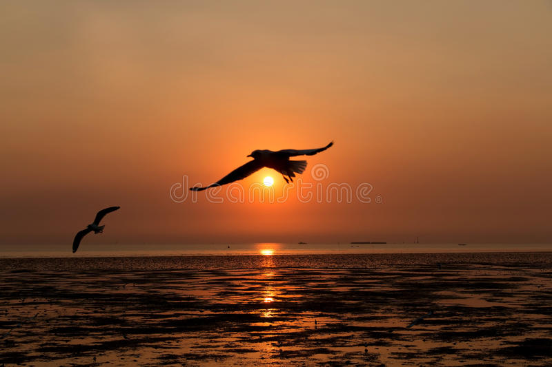 Birds in sunset sky. Background stock image