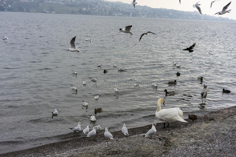Various birds and at sea or lake shore in winter stock images