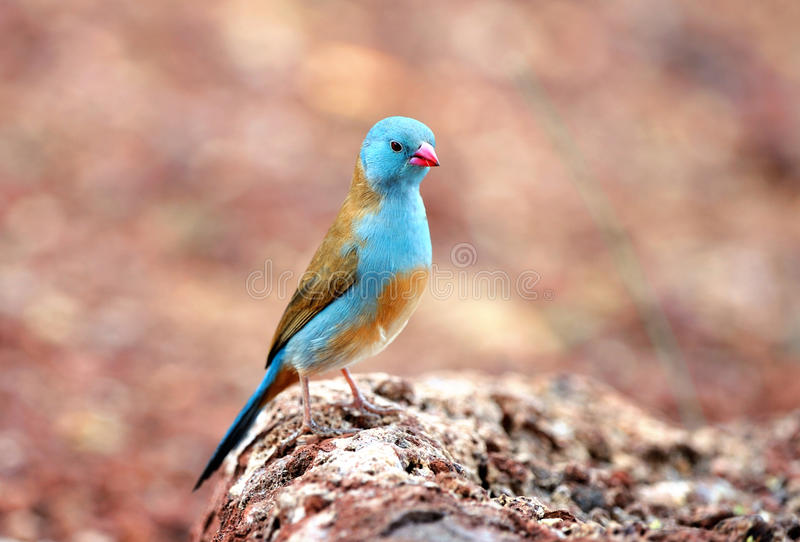 Birds of tanzania. Birds from different parts of tanzania, east africa stock image