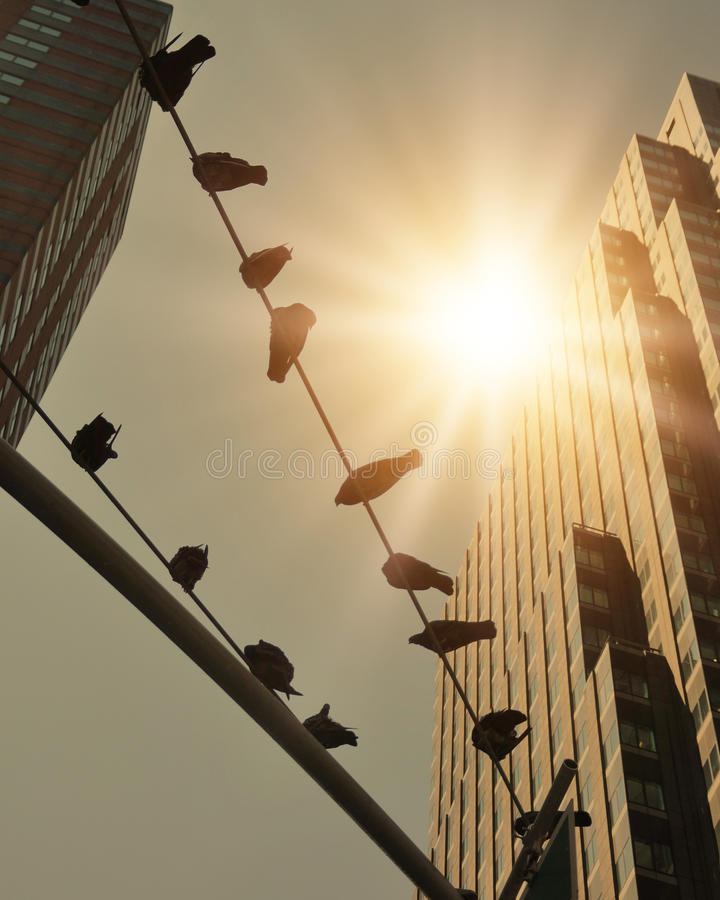 Birds On Telephone Wire In City With Sunshine Stock Image - Image of ...
