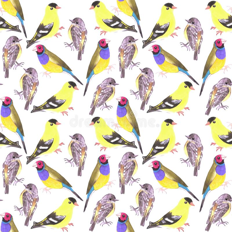 Birds in tints and shades of yellow seamless watercolor bird painting background.  stock illustration
