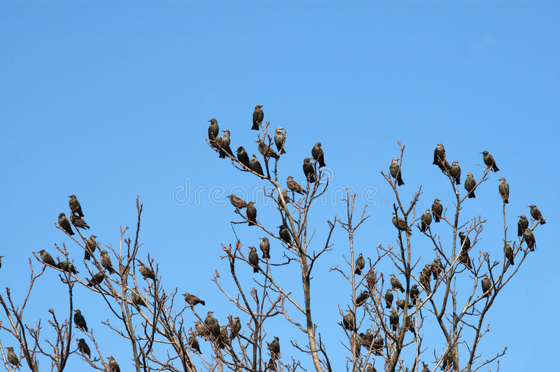 Download Birds on a tree stock image. Image of flight, branch, nature - 1514713