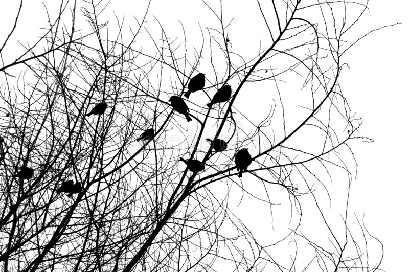 Birds on a tree stock image