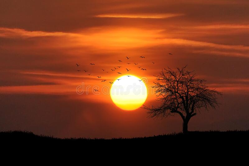 Birds and tree at sunset royalty free stock images