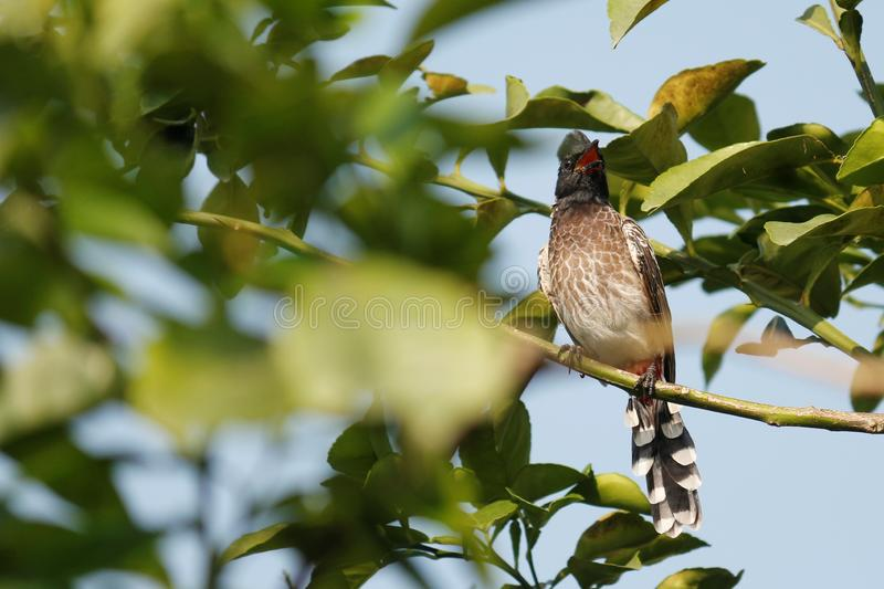Birds under green tree and searching for fruits as food stock photography
