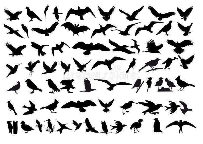 Birds vector royalty free illustration