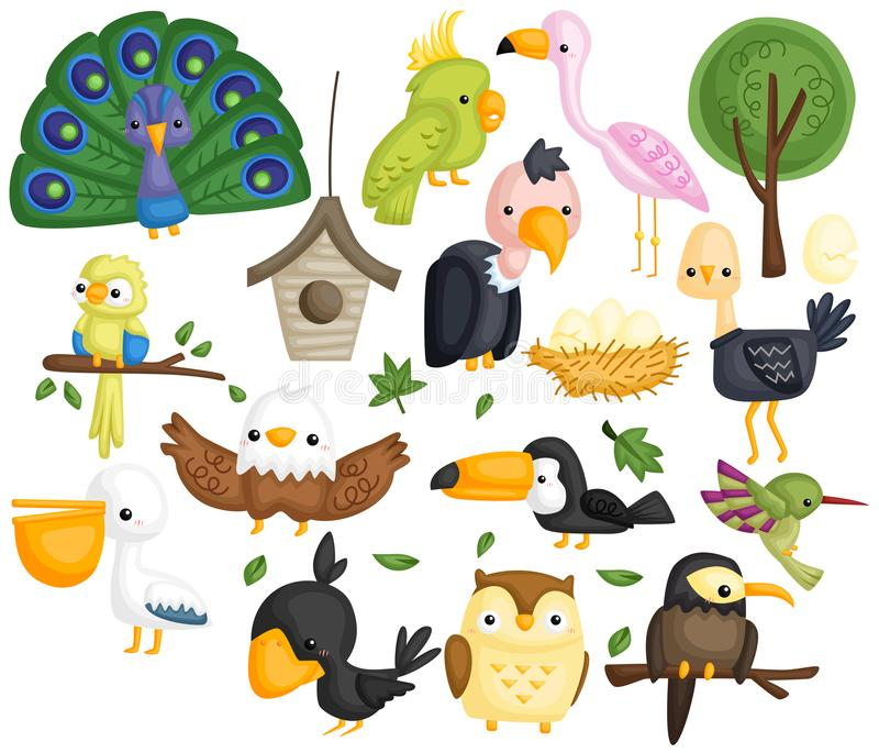 Birds vector set. A vector set of many type of birds stock illustration
