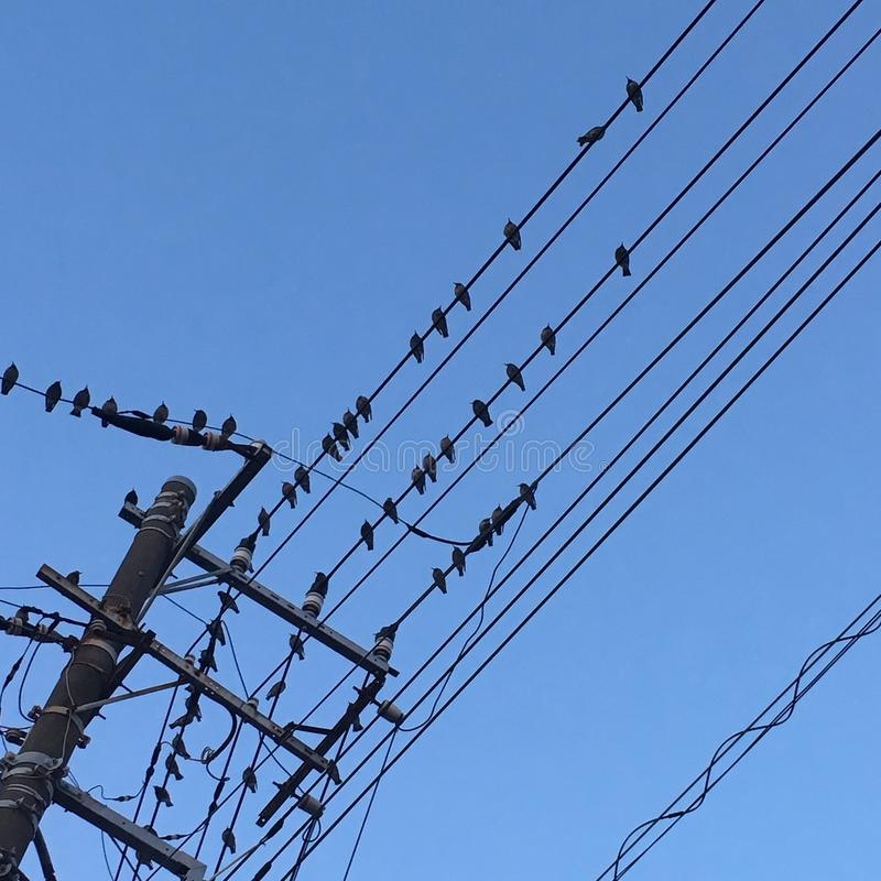 Birds waiting royalty free stock photo