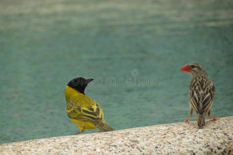 Birds at the Waters Edge stock image