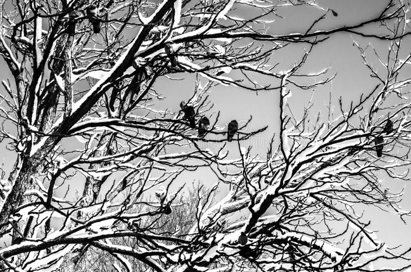 Birds in winter. The bird was sitting on a tree branch stock images