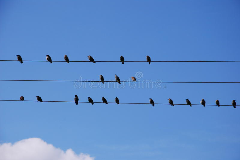 Birds on wire stock image