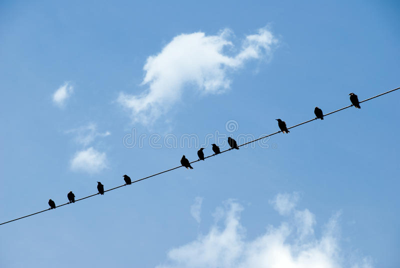 Download Birds On A Wire Stock Images - Image: 15618084