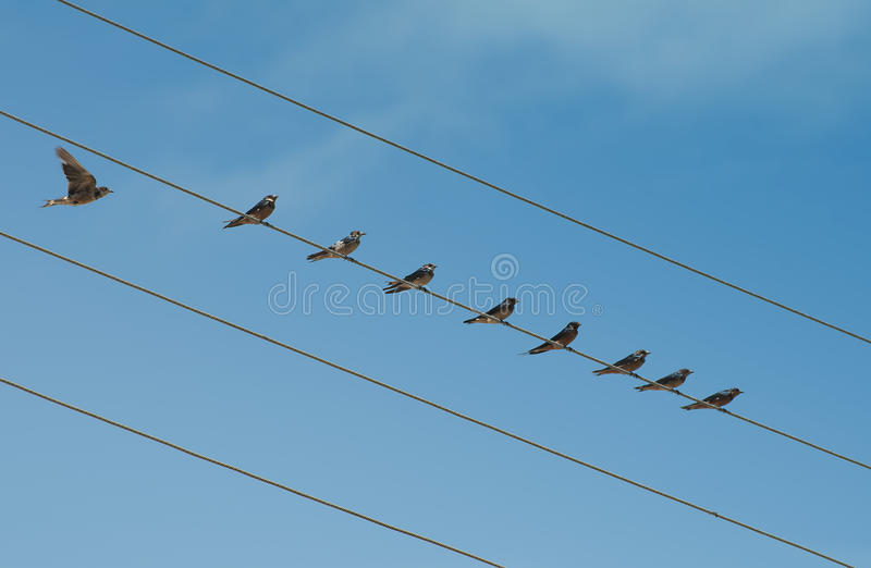 Birds on Wire royalty free stock photos