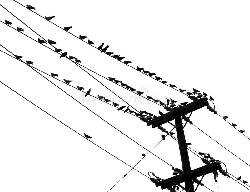 Birds on a Wire. Dozens of small birds isolated against a bright Texas sky