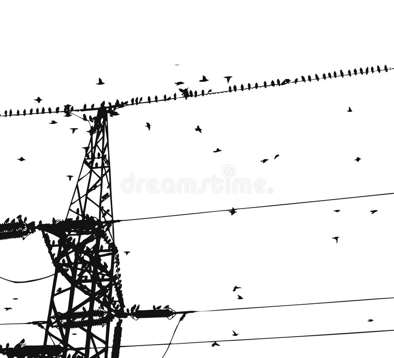 Birds on wire. Black and white birds on wire royalty free illustration