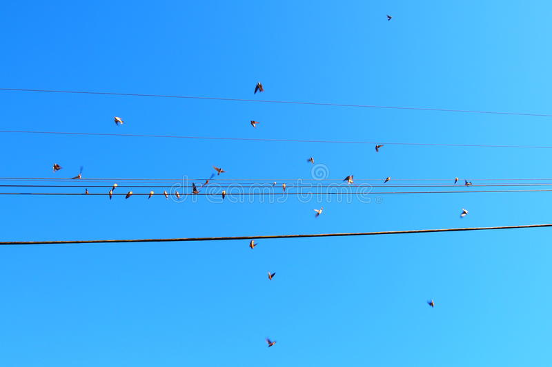 Birds on a wire and in action on a blue bird day stock photo