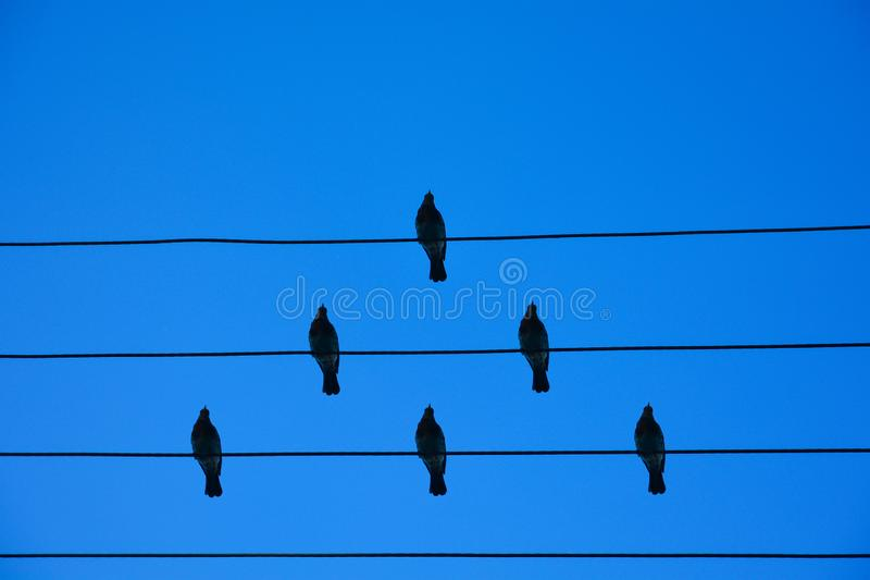 Birds on the wire. Birds on a wire on a background of blue sky. The concept of teams and teamwork, not like everyone else, and a royalty free stock photos