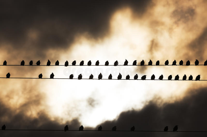 Birds on a wire. Bird photographed while resting on the electric line stock photos