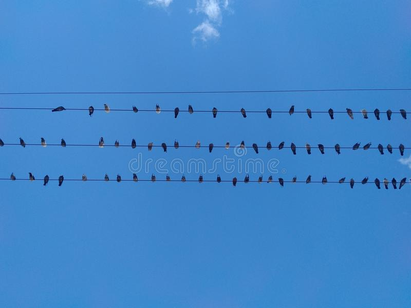Birds on a wire with blue skies. Rows of black birds on a wire against a blue sky royalty free stock image
