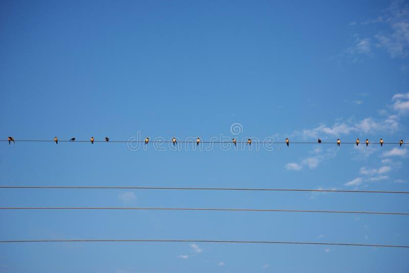 Birds on wire Blue sky. Birds on a wire Blue sky background stock photography