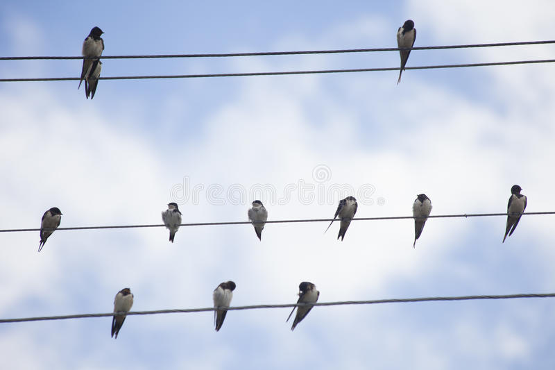 Download Birds on Wire stock image. Image of freedom, attachment - 60170495