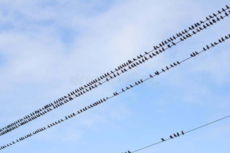 Download Birds On A Wire - Pattern Stock Photography - Image: 21978512
