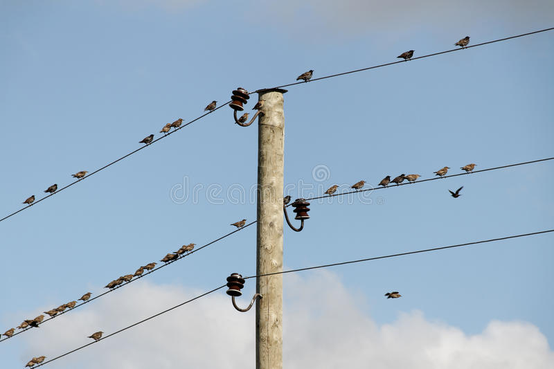 Download Birds On Wires. Royalty Free Stock Photography - Image: 20633907