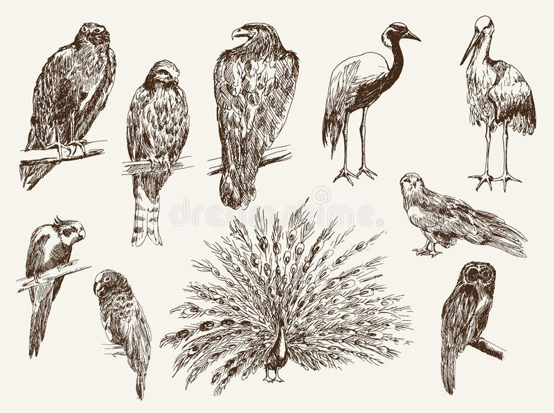 Birds from the zoo. Set of isolated vector sketches stock illustration