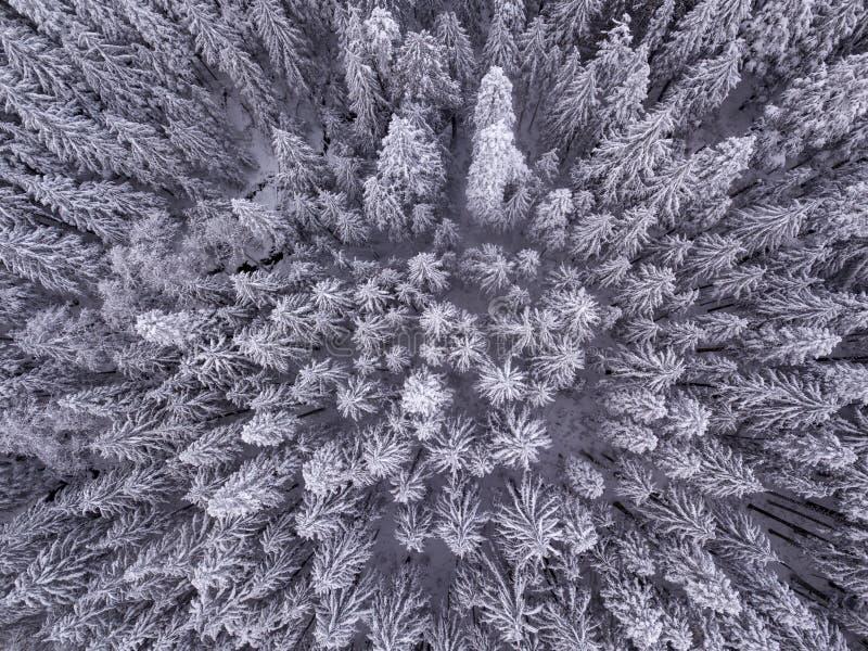 Birdseyemening van sneeuw behandelde bomen in de wildernis in de winter stock foto
