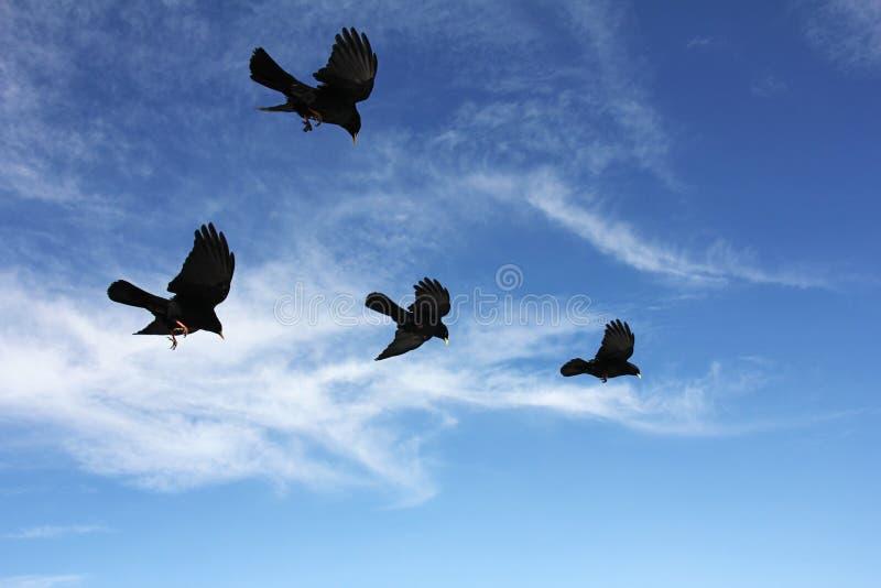 Download BirdsInFlight Stock Photography - Image: 25324232
