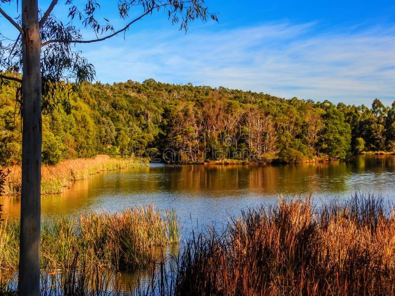 Birdsland储备的1湖 库存图片