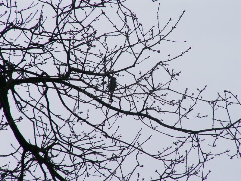 birdsong photos stock