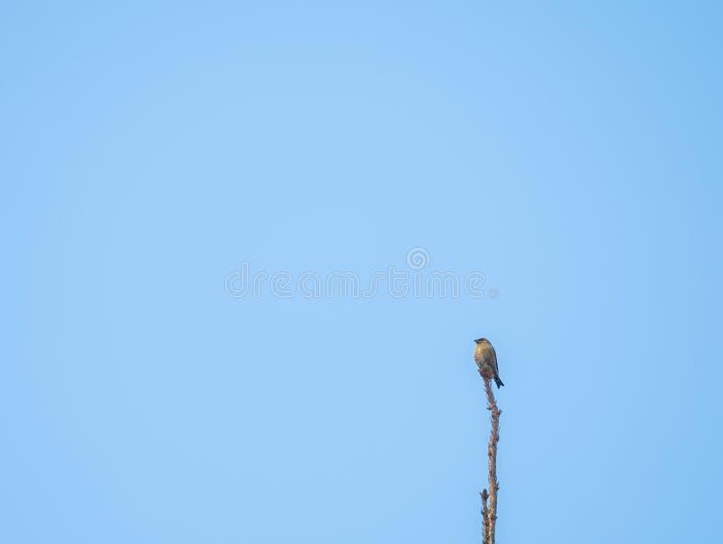 Birdwatch dans Forêt-Noire photo stock