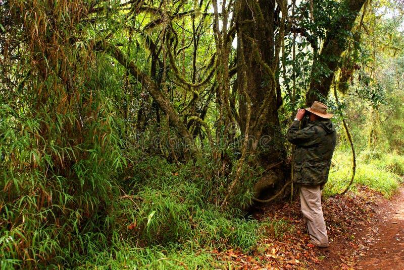 Birdwatcher in tropisch bos royalty-vrije stock afbeeldingen