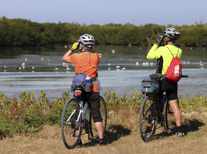 Birdwatchers. A couple with bicycles looking through a pair of binoculars for birds at the J.N`Ding` Darling National Wildlife Refuge stock photos