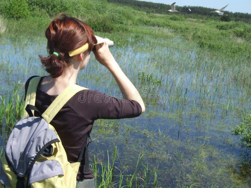 Birdwatching auf dem Sumpf lizenzfreie stockbilder