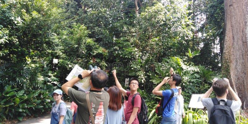 Birdwatching in Singapore Botanic Gardens stock images