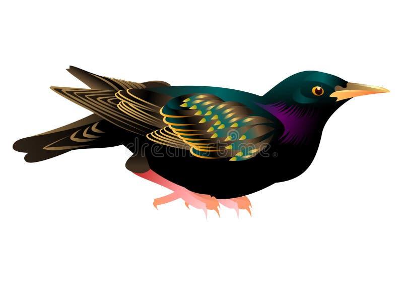 Birdy imagens de stock