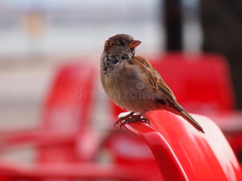 Birdy στοκ εικόνες με δικαίωμα ελεύθερης χρήσης