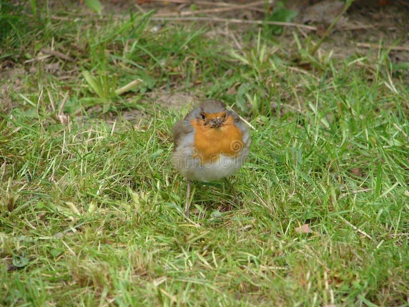 Birdy fotografía de archivo