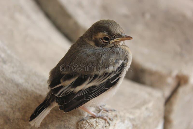 Birdy royalty-vrije stock foto