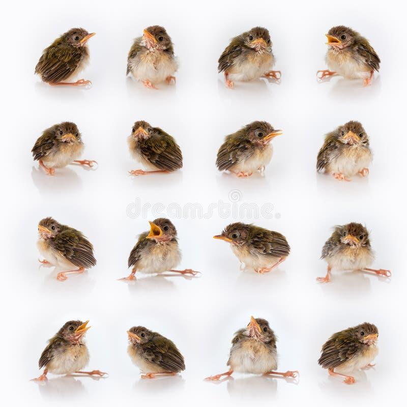 Free Birdy Mix Royalty Free Stock Photo - 18875675