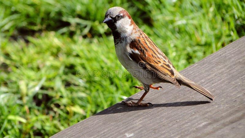 Birdy fotografie stock
