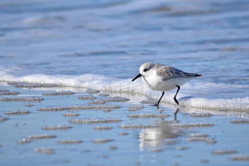 A birdy in waves royalty free stock photography