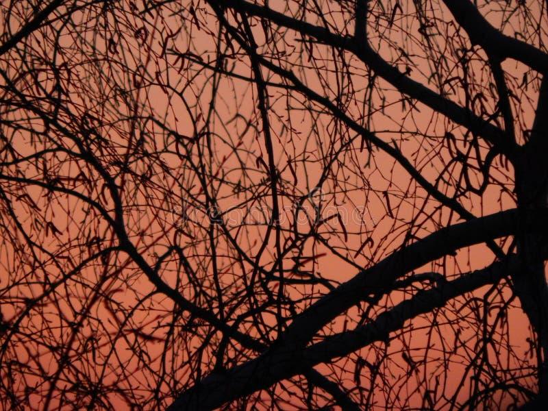 Birke und Sonnenuntergang lizenzfreie stockfotografie